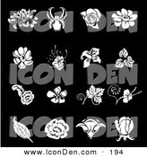 Clip Art of a Collection of White Iris, Rose, Daisy and Tulip Flower Icons over a Solid Black by AtStockIllustration