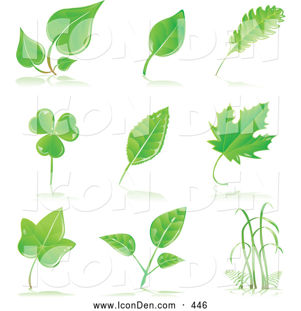 Clip Art of a Set of Maple, Shamrock, Birch and Other Tree Leaves and Grasses with Shadows on a White Background