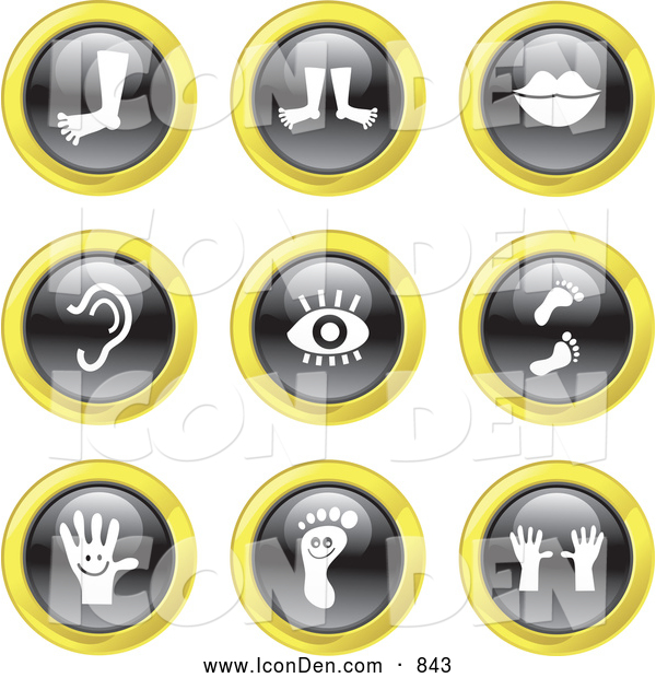 Clip Art of Black, White and Yellow Anatomy Icons