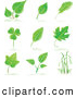 Clip Art of a Set of Maple, Shamrock, Birch and Other Tree Leaves and Grasses with Shadows on a White Background by Tonis Pan